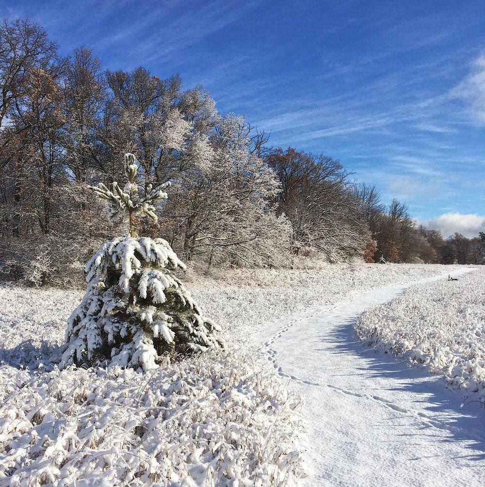 First Snow 2019.JPG