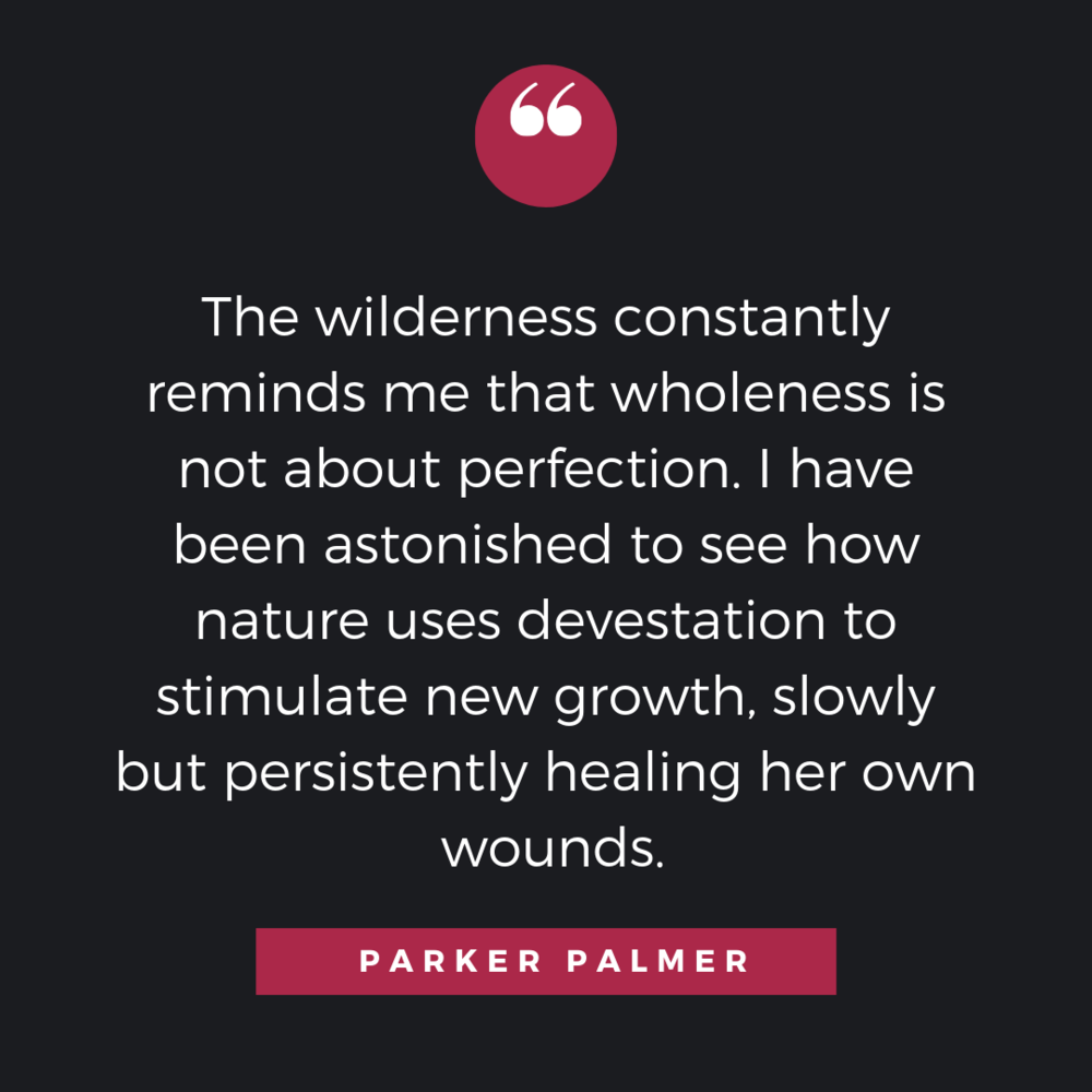 2The wilderness constantly reminds me that wholeness is not about perfection. I have been astonished to see how nature uses devestation to stimulate new growth, slowly but persistently hearling her own wounds. (1).png