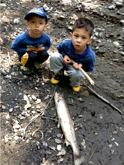 2013: Menlo Park residents found a dead adult steelhead in the San Francisquito Creek bed. Photo courtesy of Mike Lanza. More at  http://www.stanforddaily.com/2014/12/21/stanford-should-abandon-the-searsville-dam/