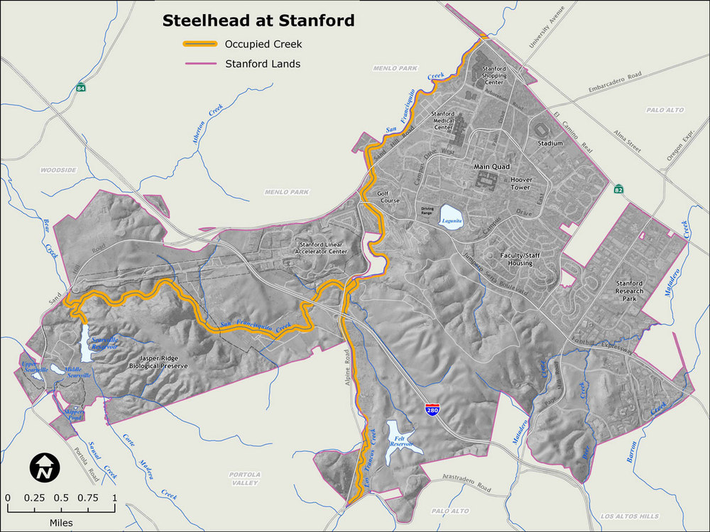 Map from Stanford's Habitat Conservation Plan (HCP), showing steelhead-occupied creeks on campus, and the habitat dead-end at Searsville Dam. After more than a decade of studying habitat areas on campus and options for steelhead conservation and recovery, Stanford withdrew the Searsville portion of the HCP and announced that it would convene a committee to determine next steps. More at http://hcp.stanford.edu