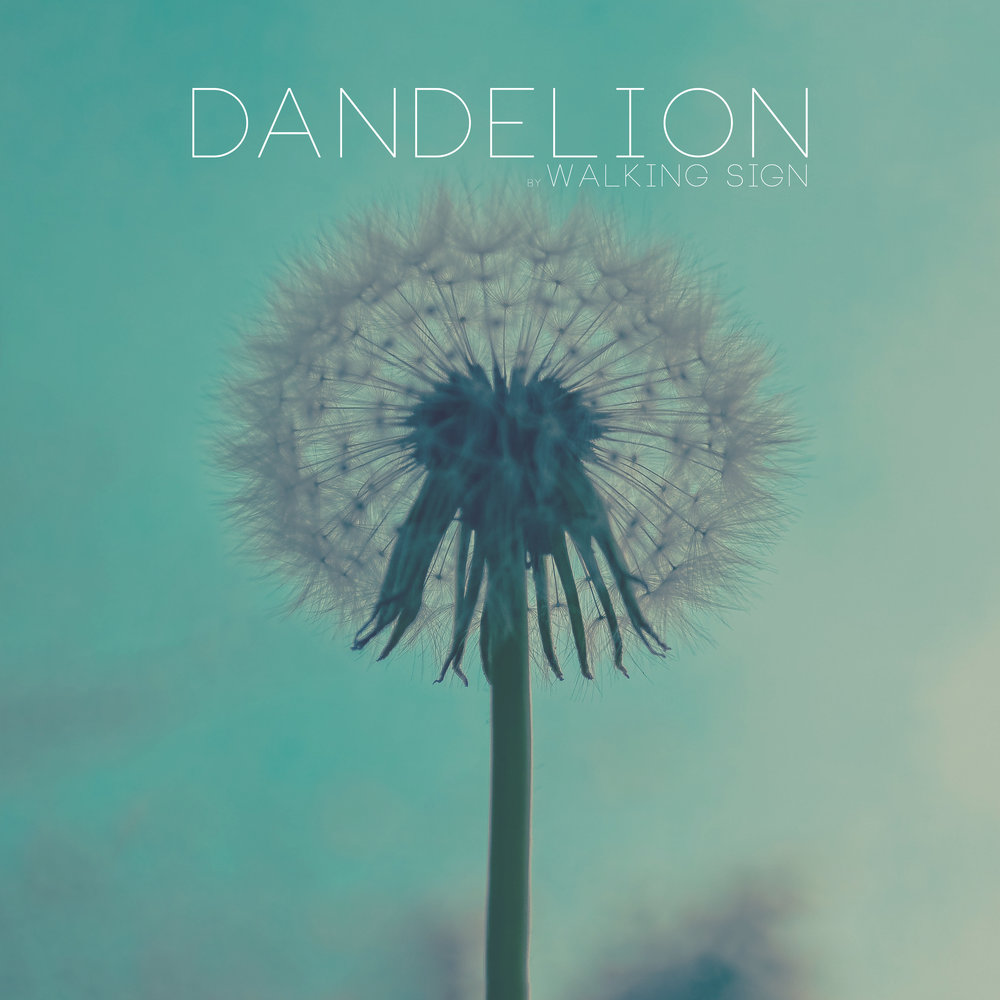 Dandelion Promo_3.jpg
