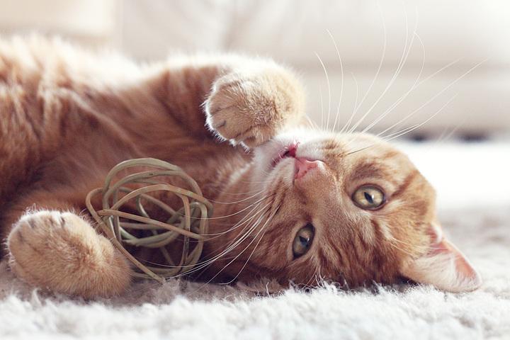 catband-302x251.jpg