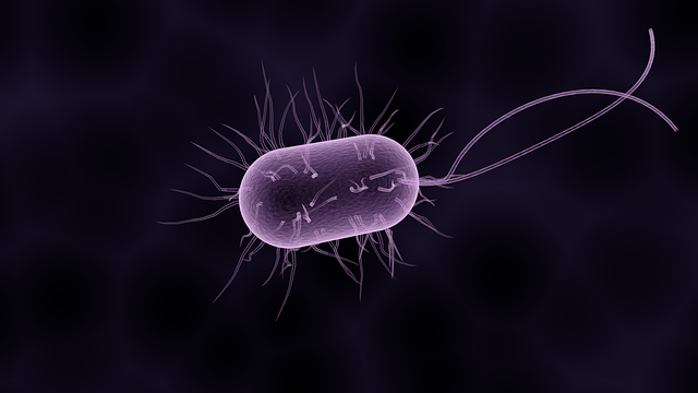 Bacteria, a microscopic bug