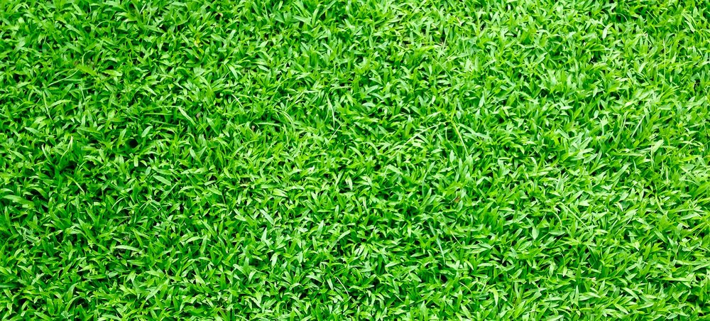 Why is artificial turf a good investment for your home EcoGrass
