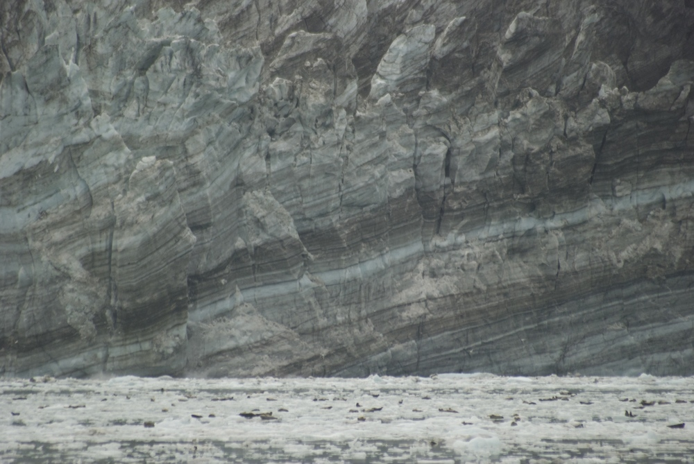 The face of Johns Hopkins glacier, Glacier Bay, Alaska. (The blobs on the icebergs are seals)