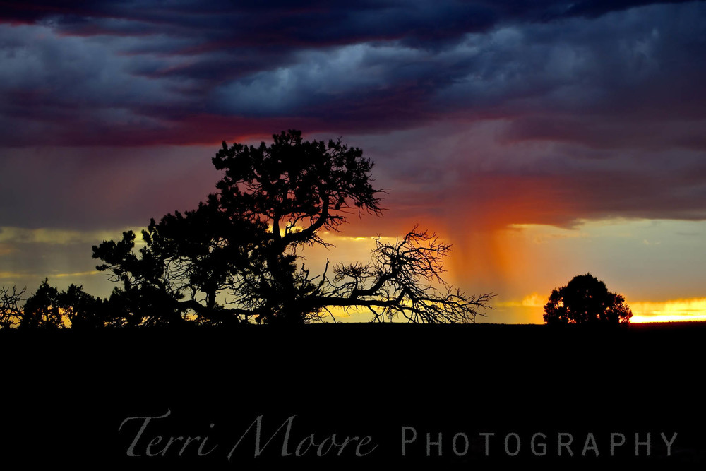 wm desert storm 1 dark 4x6.jpg