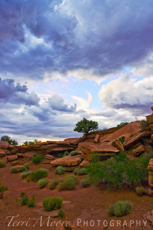 wm desert storm 2 4x6.jpg