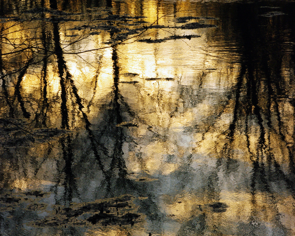 (4)tree reflection 2 16x20.jpg