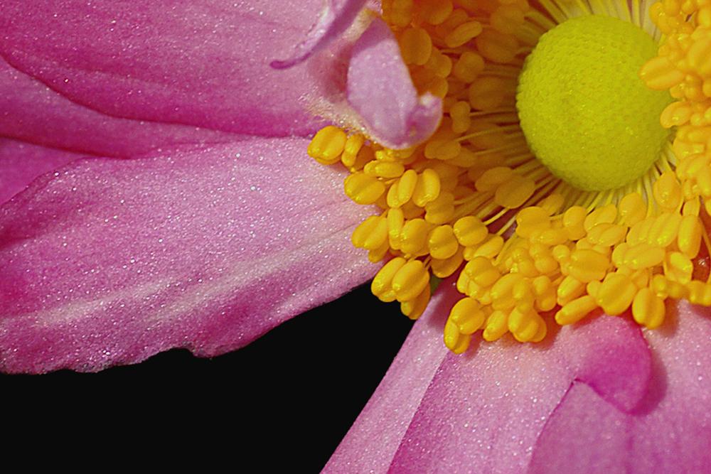 anemone 1 closer.jpg
