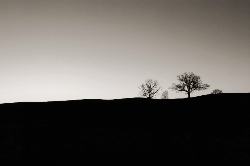 bw d-19 tree field 2.jpg