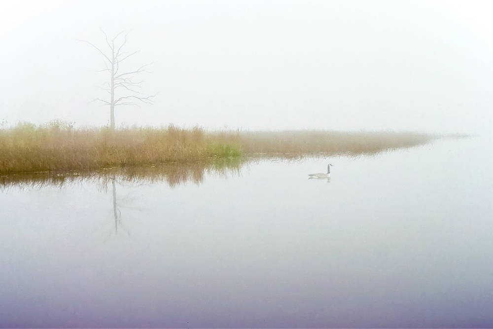 little lake fog tree goose a.jpg
