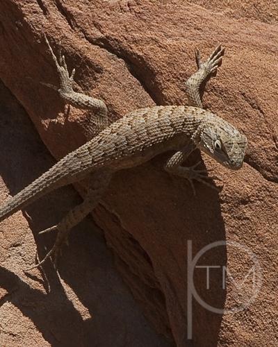 lizard site.jpg