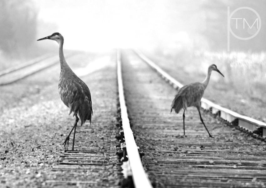 bw crane tracks site.jpg