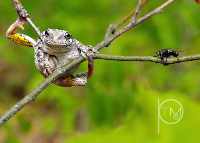 (8)frog n fly site.jpg