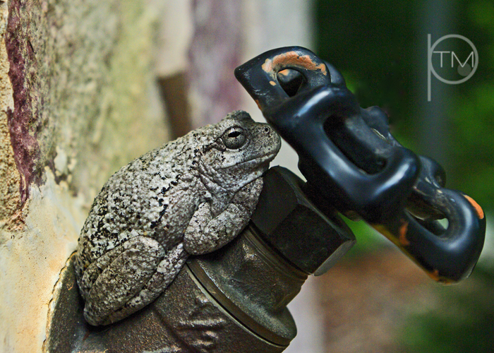 (4)frog on faucet site.jpg