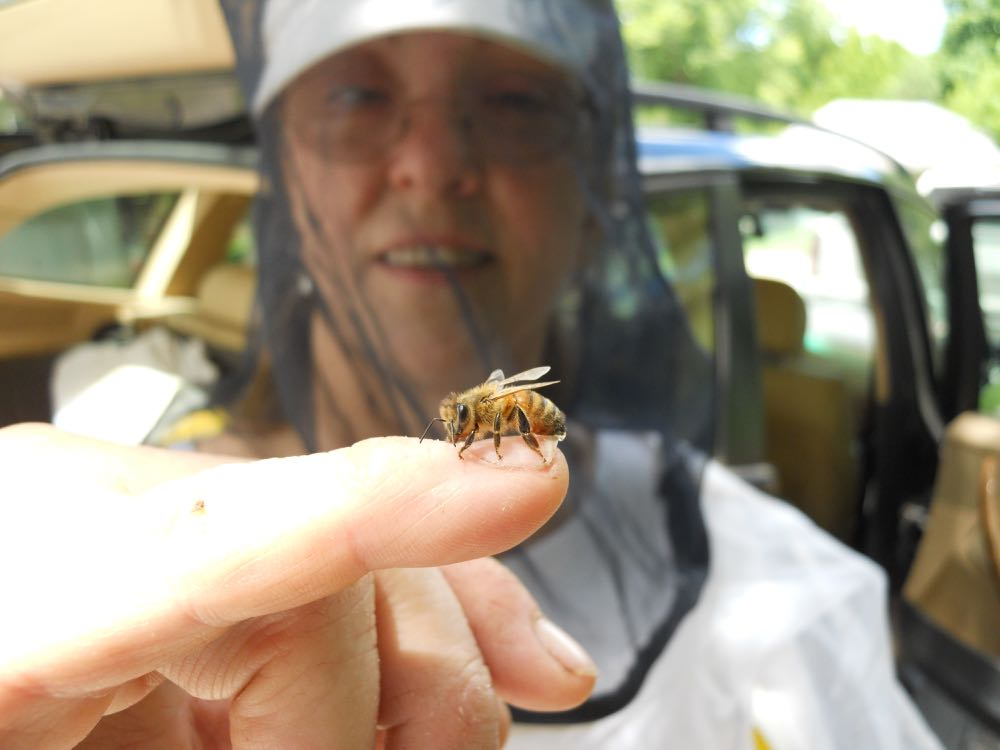 THE STAR OF HOME SWEET BEES, A WORKER BEE!
