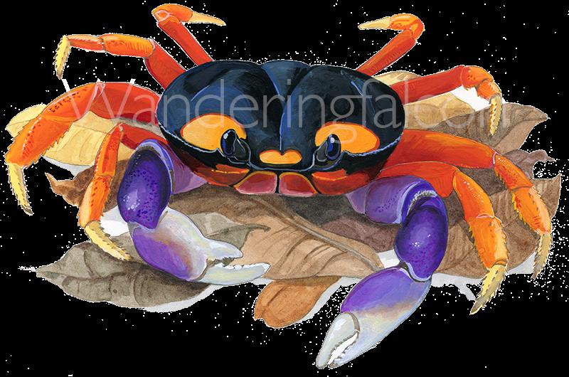 halloween_crab.png