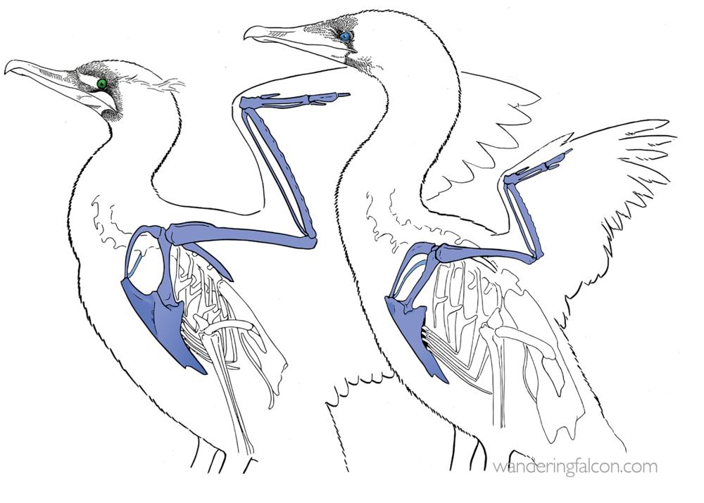 cormorants.png