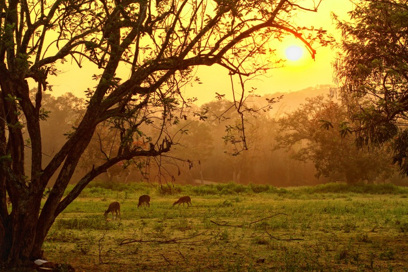 Beautiful grassland where deer peacefully  enjoy a meal, as the trees watch them… the   simple harmony of nature bathed in golden   sunlight.