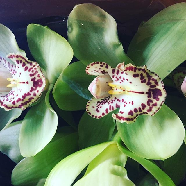 This is from our Instagram page @evelisafloral_design, we used these cymbidiums in a fall wedding we did last year.