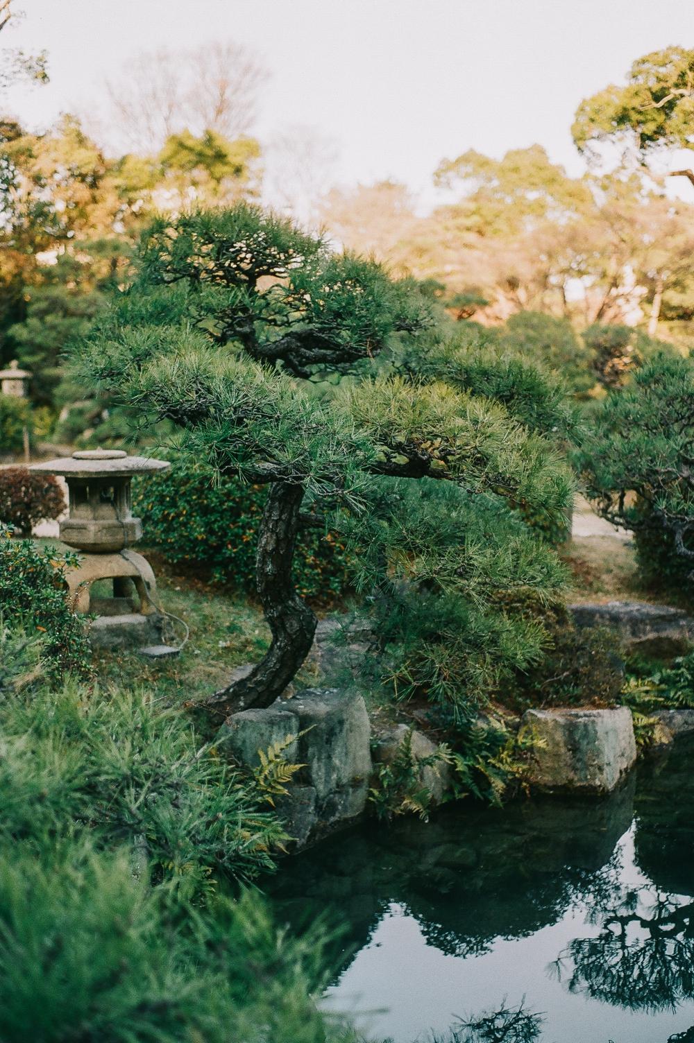 Sorakuen Garden Cocoro and Kazuya 23.jpg
