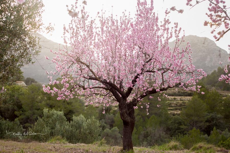 Almendros-en-flor-Retratos-Corinne-Zoë- fotografias-Nelly-del-Arbo-33.jpg