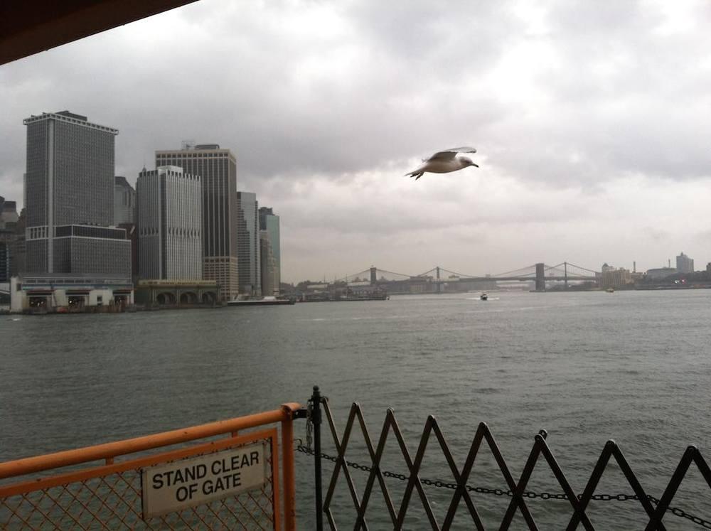 Seagull_Staten_Island_Ferry.jpg