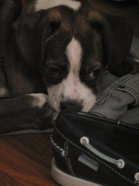 amo shoes2