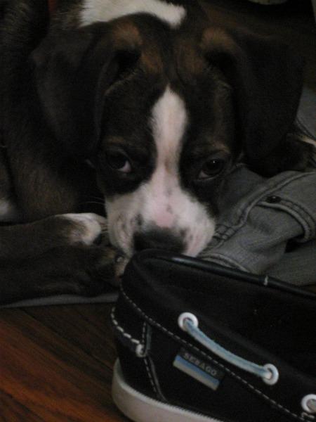 amo shoes3