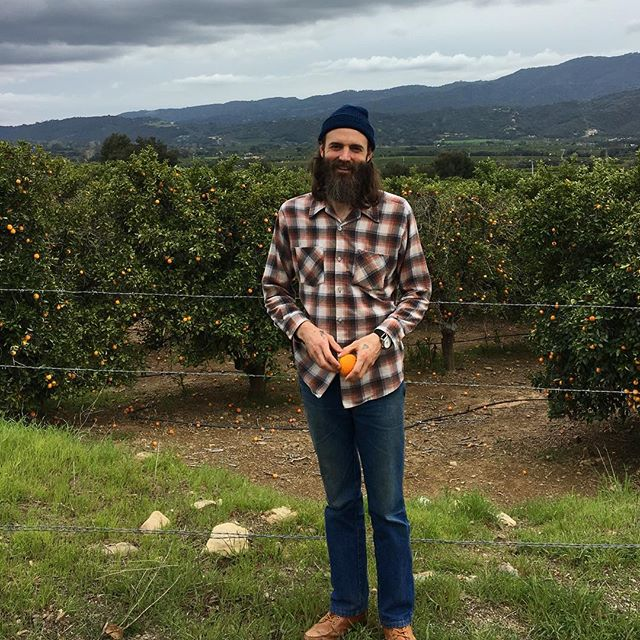 Orange pickin' and wine tastin' in California's central coast wine country. #wineexploration #thetackybranchway