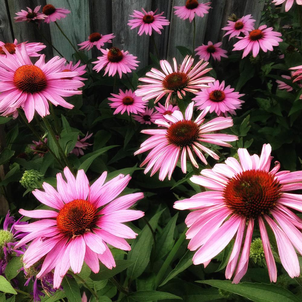 plant_native