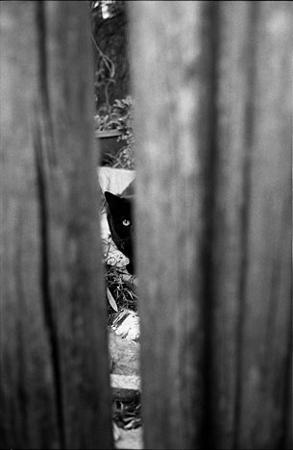 cat_SM.0001.jpg