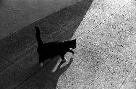 cat_SM.0002.jpg