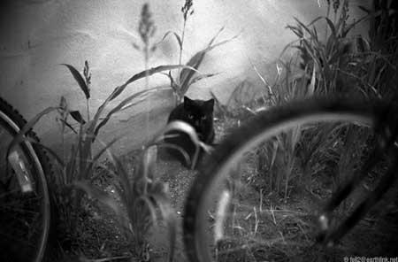 cat_SM.0011.jpg