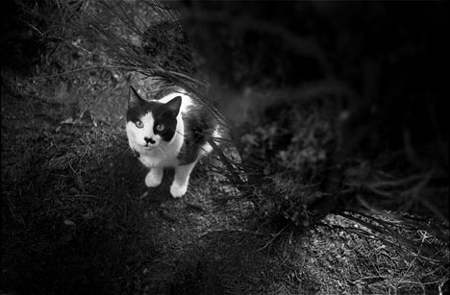 cat_SM.0006.jpg