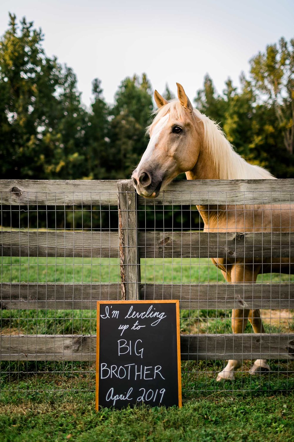 Horse standing with chalkboard sign | By G. Lin Photography | Durham Maternity Photographer