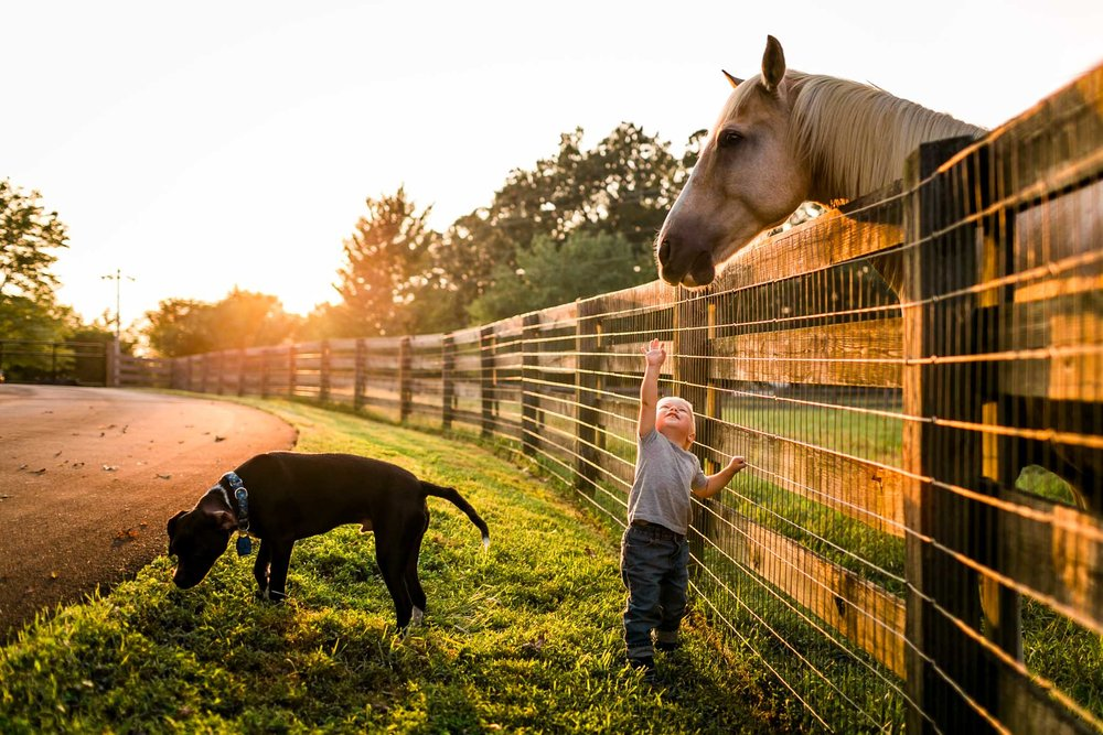 Little boy reaching up to horse | By G. Lin Photography | Durham Family Photographer
