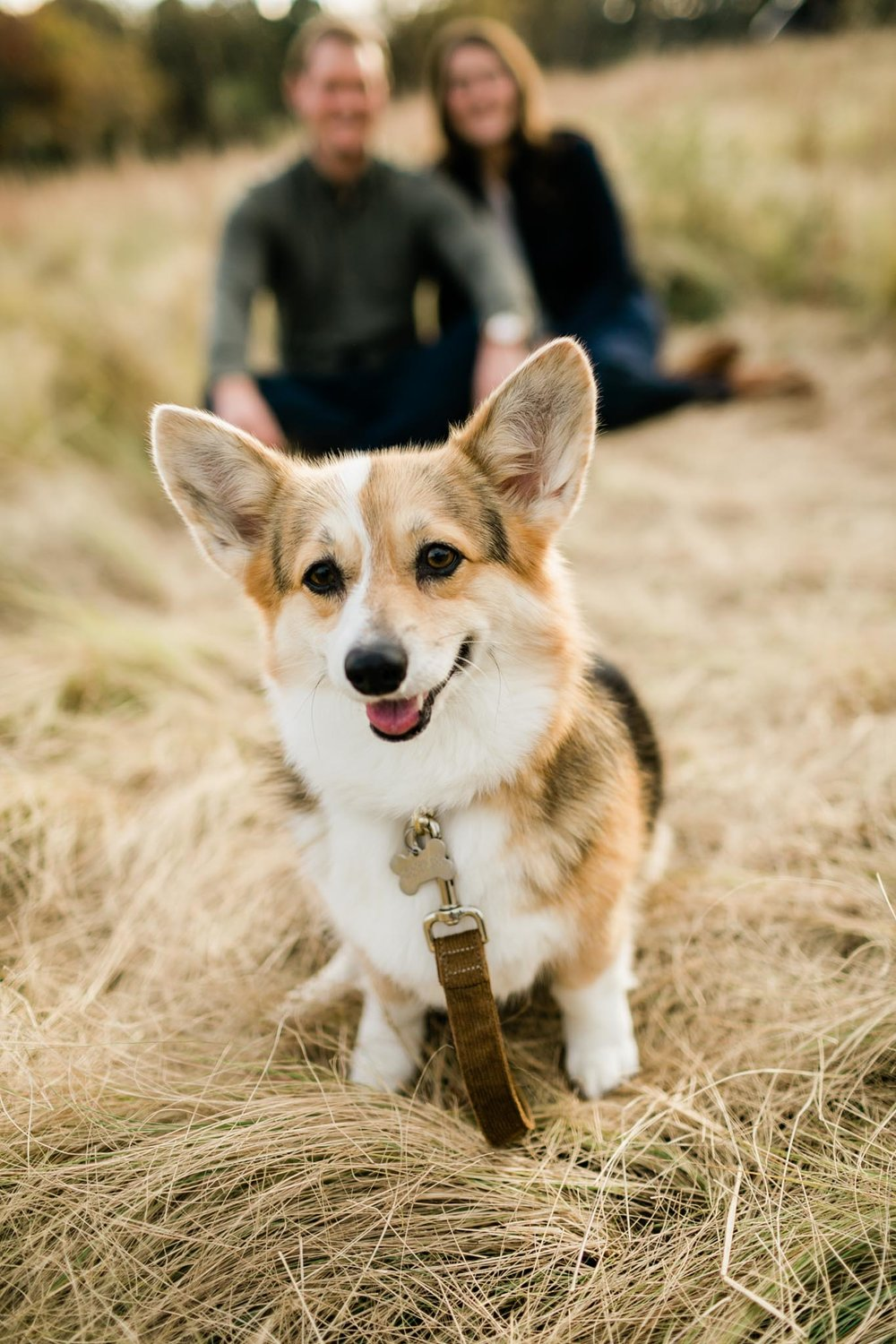 Portrait of corgi dog in Raleigh | Raleigh Dog Photographer | By G. Lin Photography