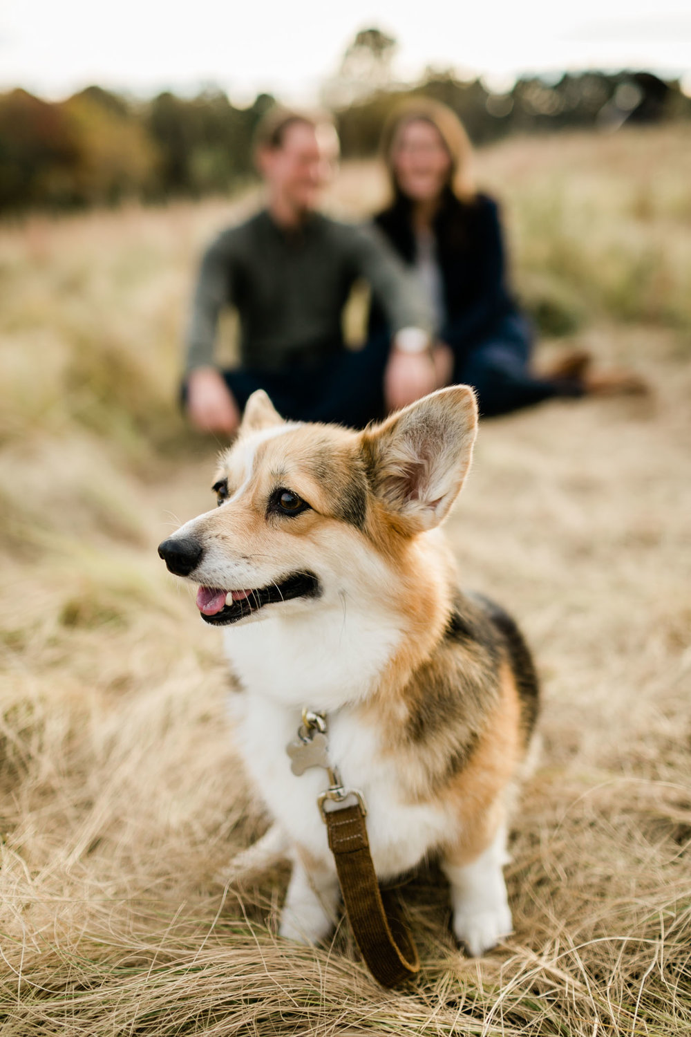 Cute dog photo at NCMA | Raleigh Pet Photographer | By G. Lin Photography