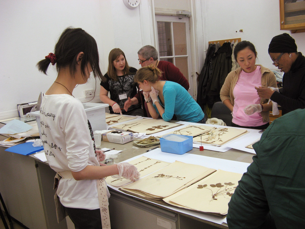 Sherry teaching introduction to herbaria at Camberwell School of Art