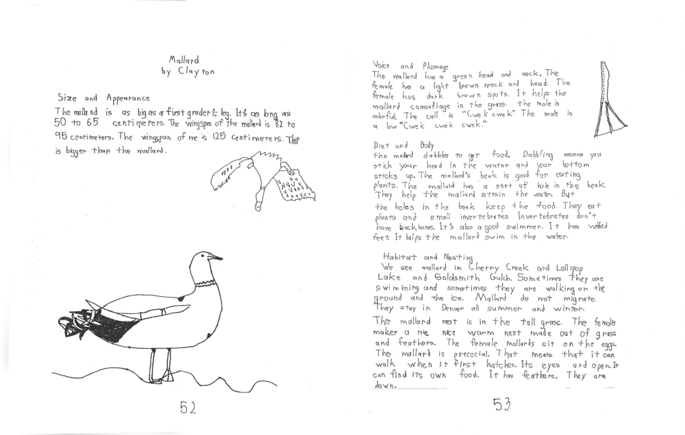 Pages from rmsel_birds_1.jpg