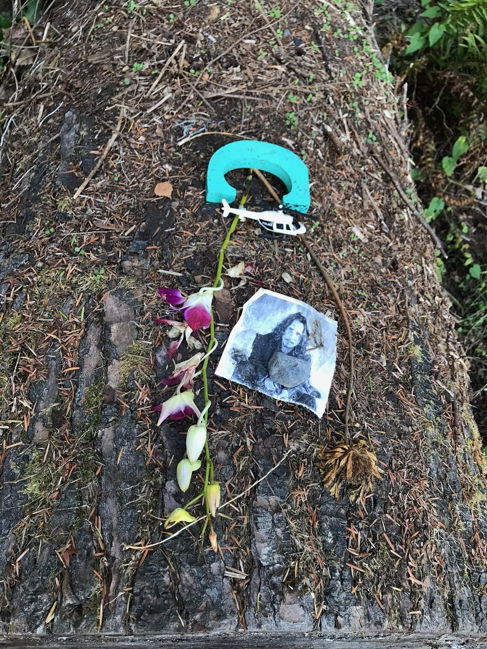 Left a the unofficial Kurt Cobain memorial at Virreta Park