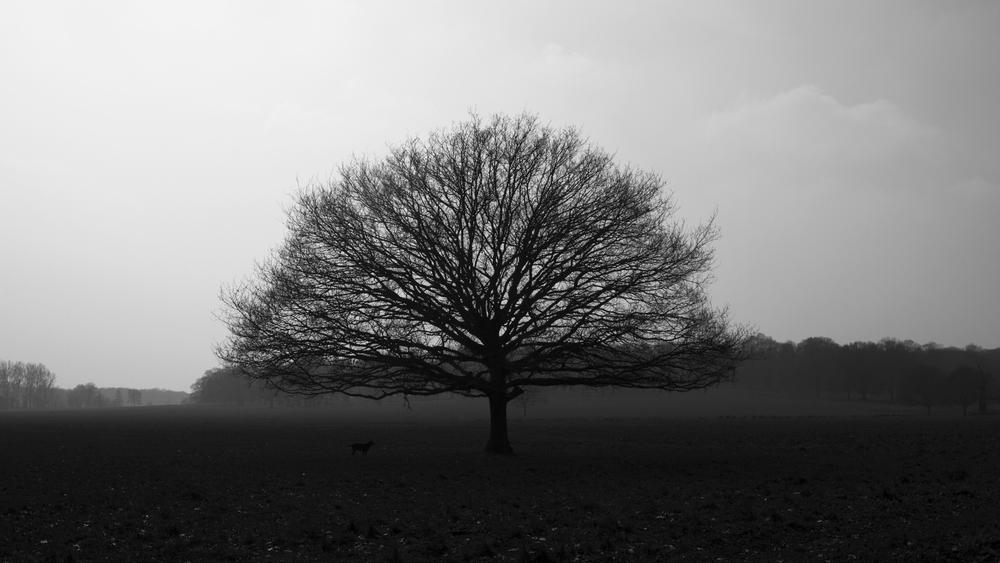 BW tree_9236.jpg