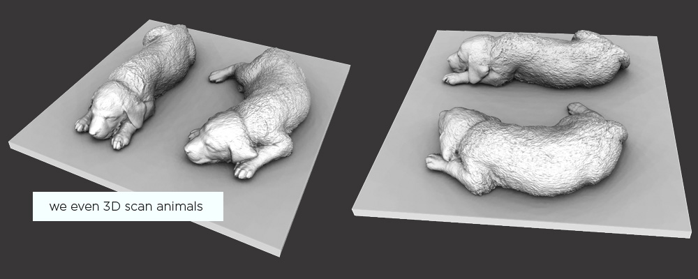 3D scanning animals