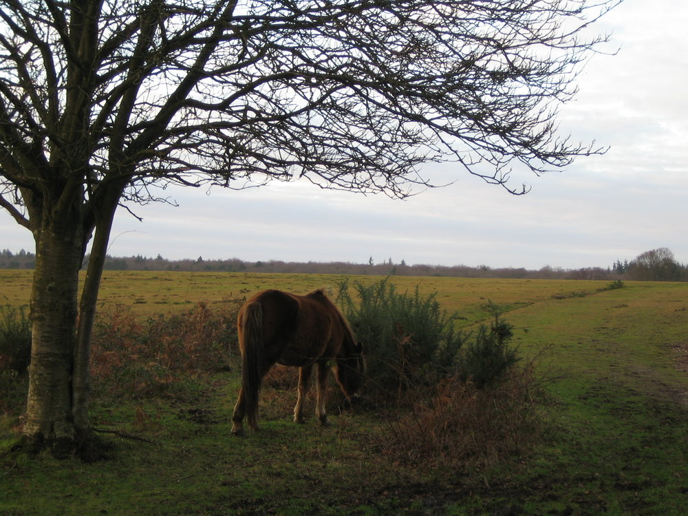 New Forest is famous for its ponies.