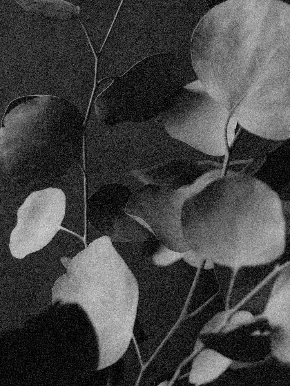 LUCIA-PEARL-JEWELRY-LOOKBOOK-SLIDES-15.jpg