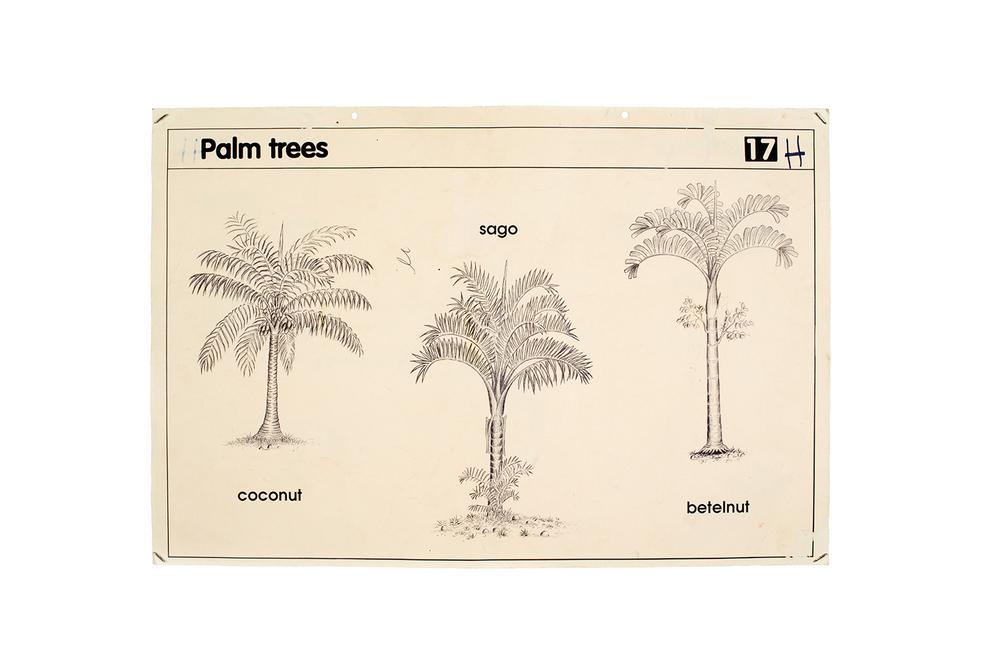 Palm-trees,-educational-poster-WEB.jpg