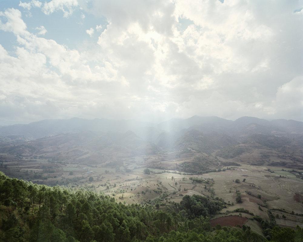 Myanmar Pines.jpg
