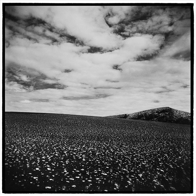 Dwarf buckwheat spaced out on the lava cinders at Paisley Cone, Craters of the Moon National Monument, Idaho. * * * * * * * * * @mypubliclands @usinterior #mypubliclands #keepitpublic #protectourpubliclands #findyourpark #usinterior #protectthewild #aperturefoundation #lensculture #blackandwhite #holga #filmisnotdead #mediumformat #filmphotographic #documentary #idaho #afar #thegreatoutdoors #wildernessculture #americanwest