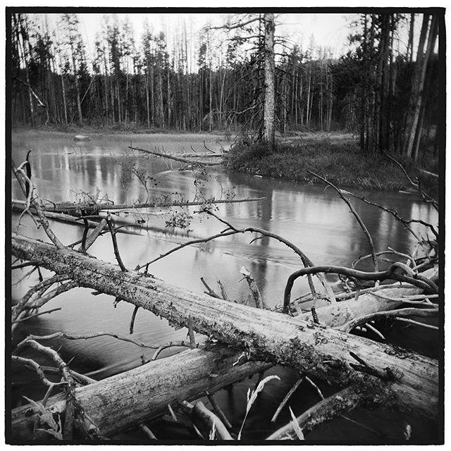 Redfish Lake Creek, Sawtooth National Recreation Area, Idaho. * * * * * * * * * @mypubliclands @usinterior #mypubliclands #keepitpublic #protectourpubliclands #findyourpark #usinterior #protectthewild #aperturefoundation #lensculture #blackandwhite #holga #filmisnotdead #mediumformat #filmphotographic #documentary #idaho #afar #thegreatoutdoors #wildernessculture #americanwest
